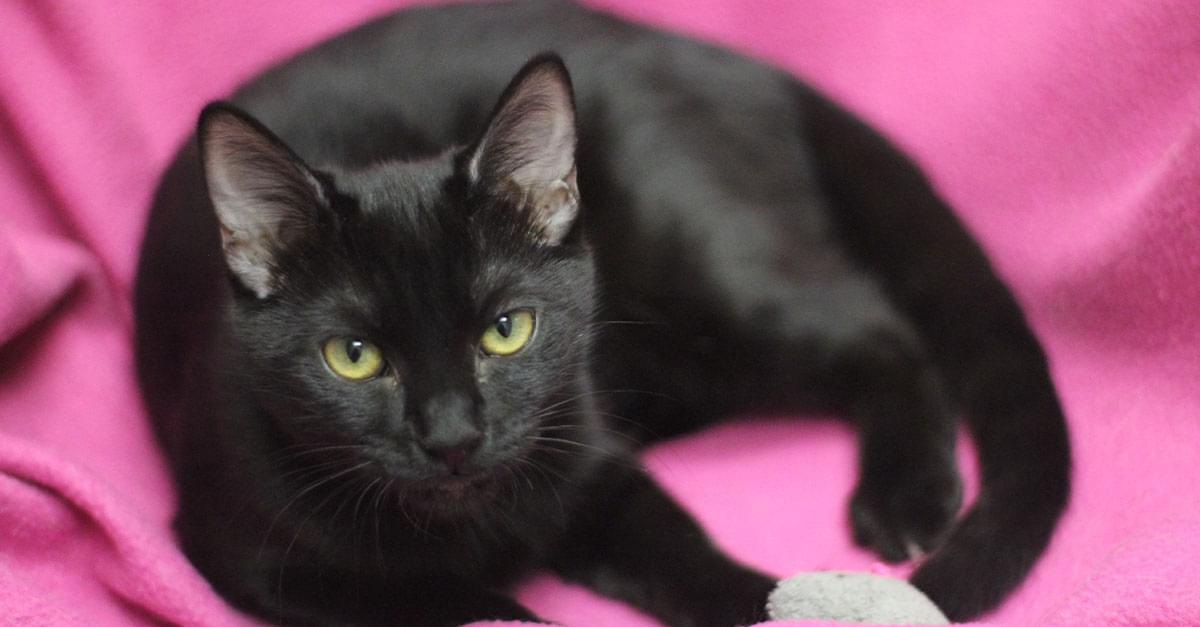 Kitties and K9s: Winona