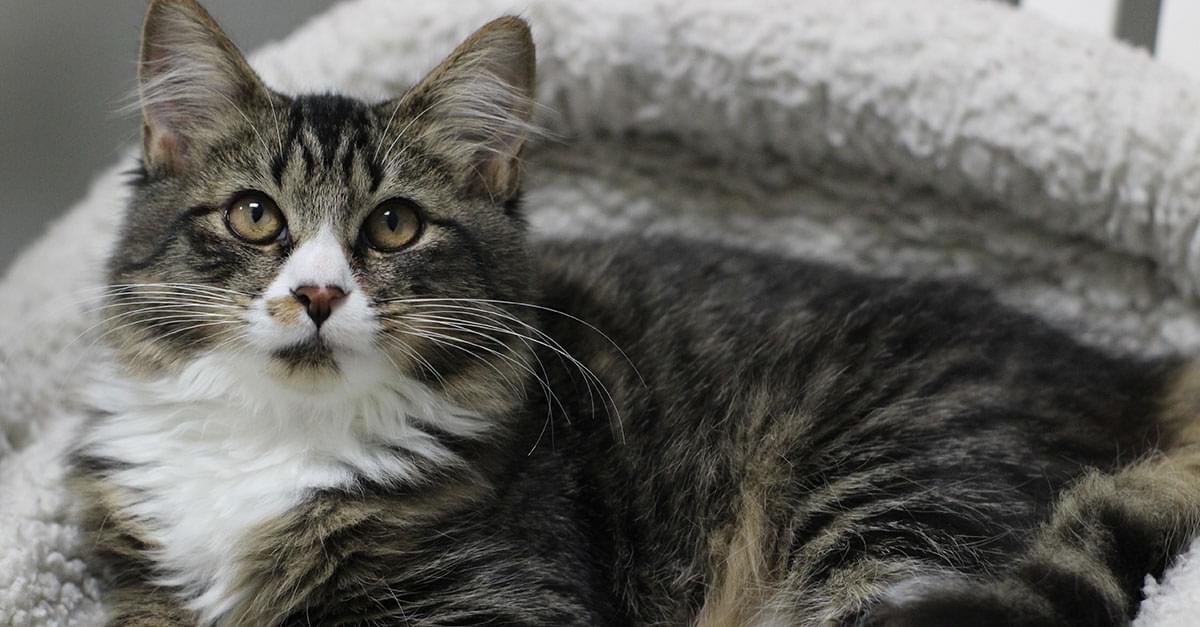 Kitties and K9s: Cosette