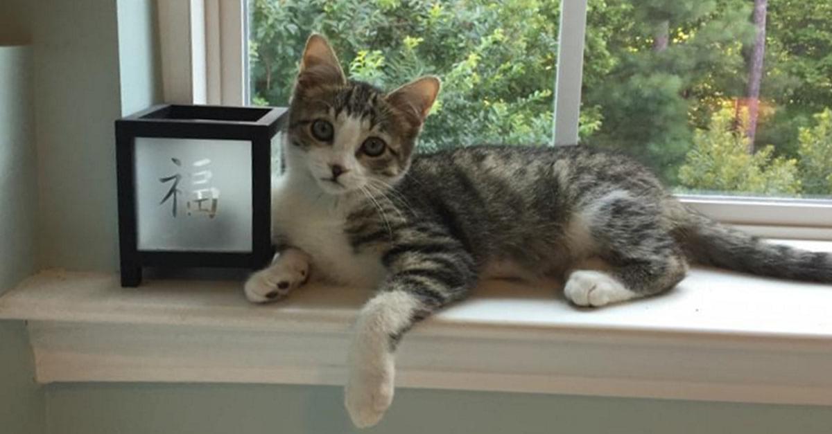 Kitties and K9s: Elijah