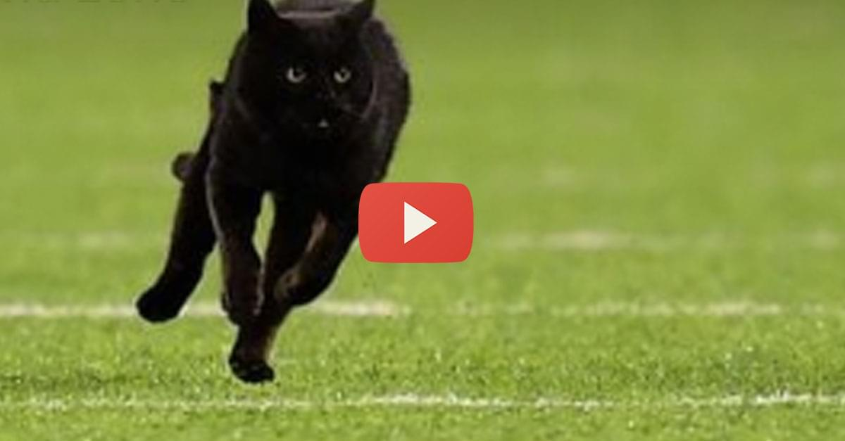 Watch: Black Cat Delays NFL Game
