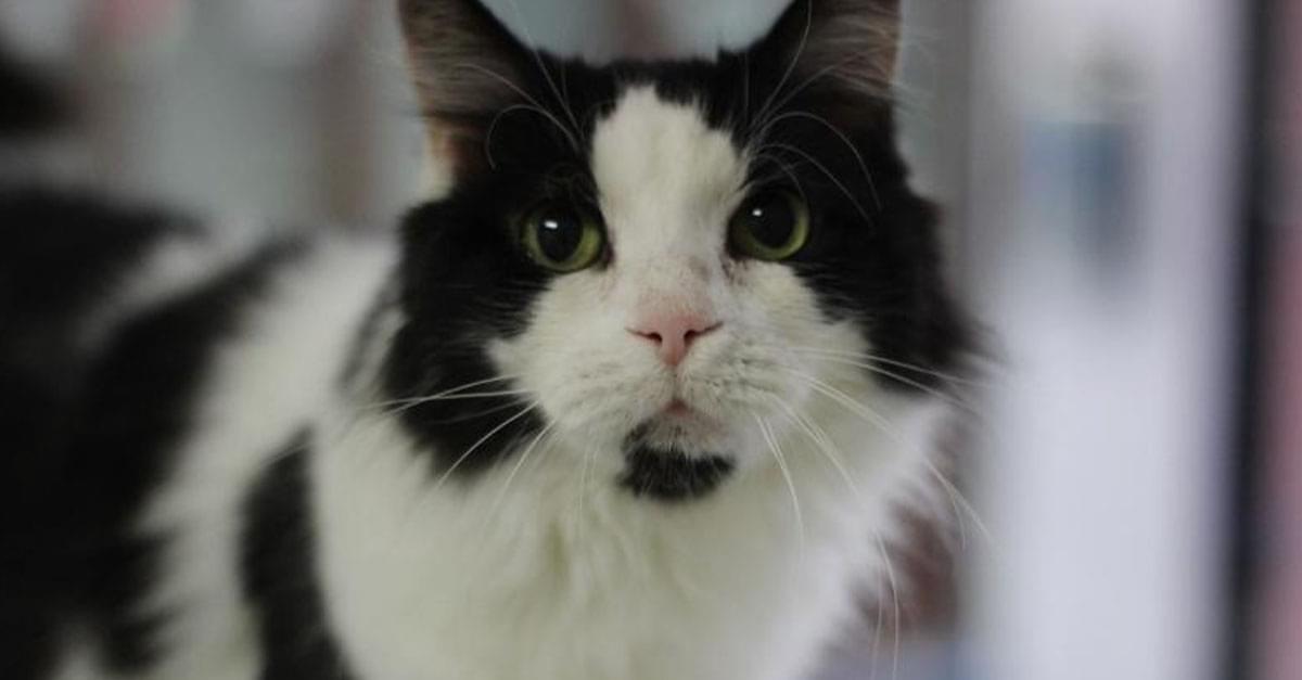 Kitties and K9s: Hastings
