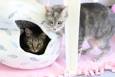 Kitties and K9s: Nancy and Skylar