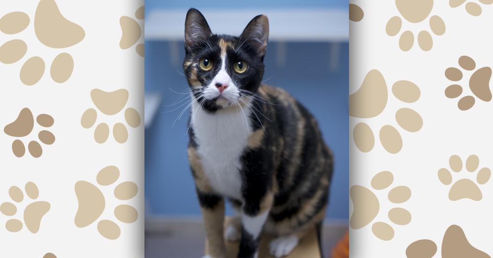 Kitties and K9s: Jules