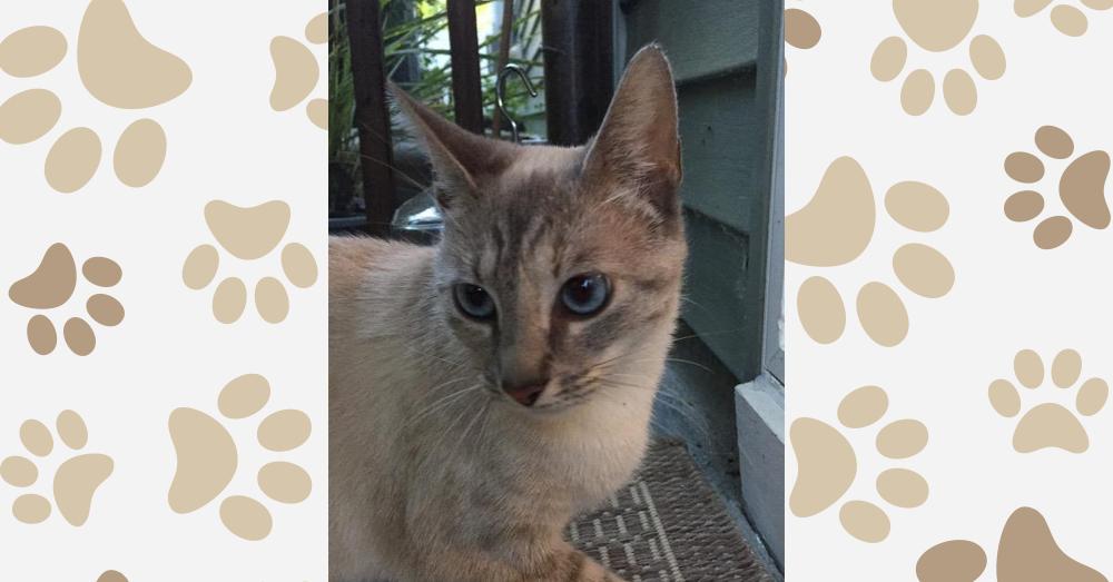 Kitties and K9s: Coquina