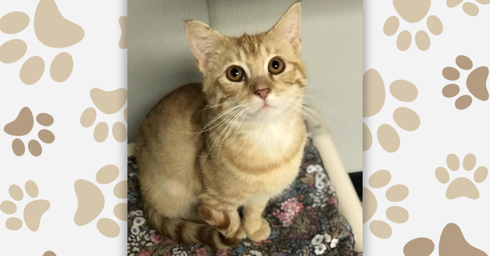 Kitties and K9s: Cheddar