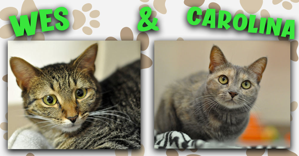 Kitties and K9s: Wes and Carolina