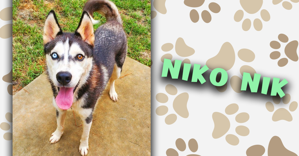 Kitties and K9s: Niko Nik