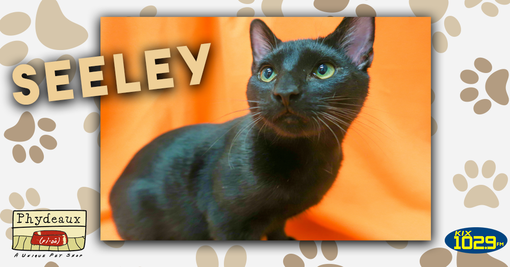 Kitties and K9s presented by Phydeaux Pet Stores: Seeley