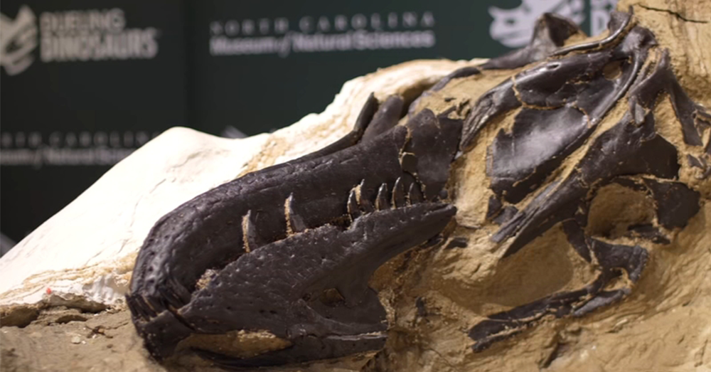 T. Rex skeleton coming to Raleigh museum