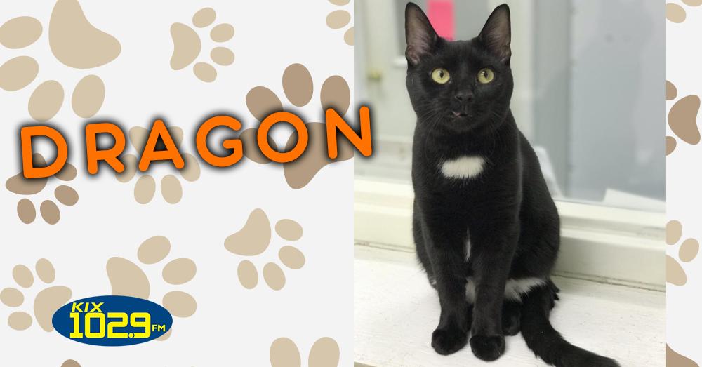 Kitties and K9s: Dragon
