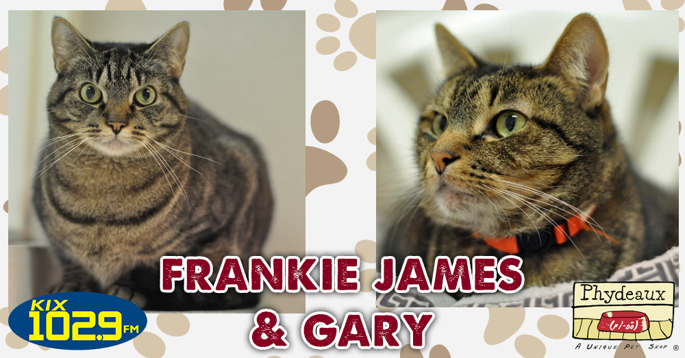Kitties and K9s: Frankie James and Gary