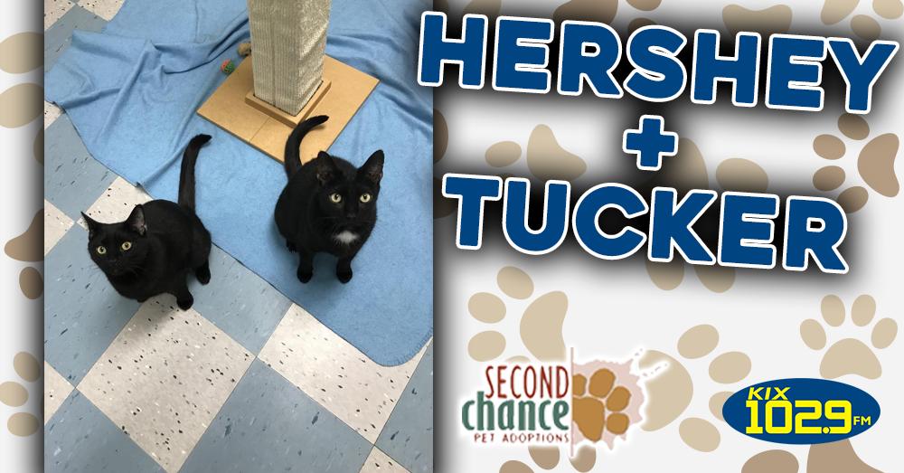 Kitties and K9s: Hershey and Tucker