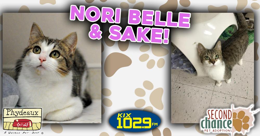 Kitties and K9s: Nori Belle and Sake