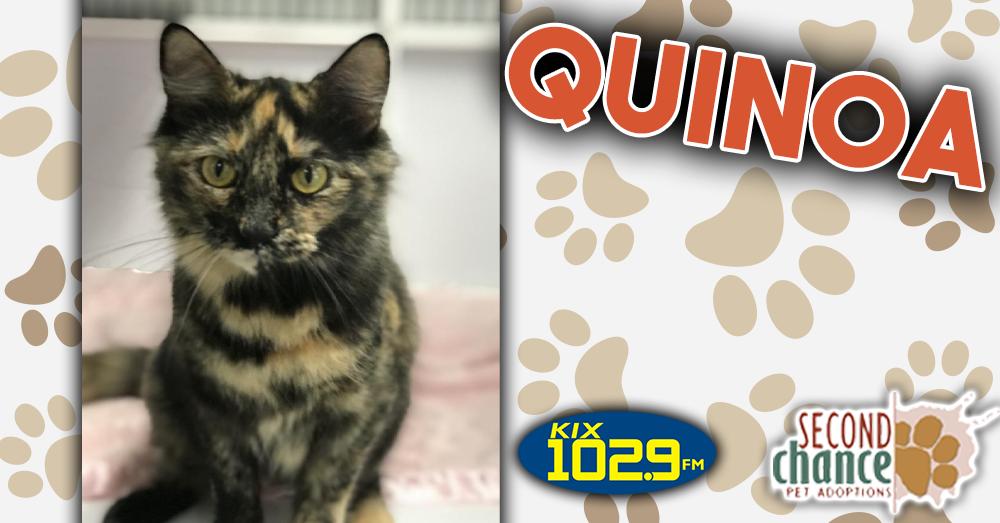 Kitties and K9s: Quinoa