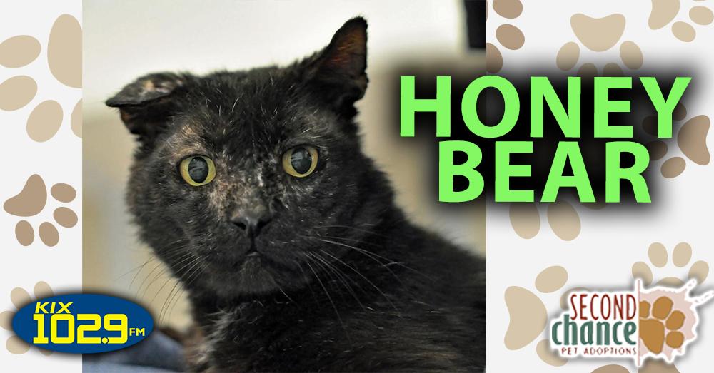 KIX Kitties and K9s:  Honey Bear