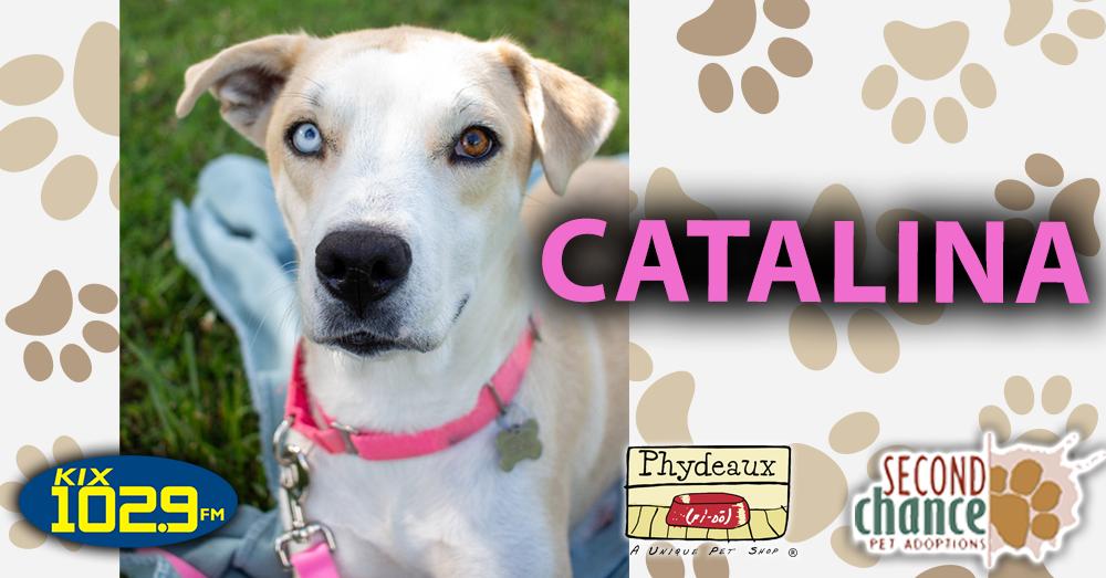 KIX Kitties and K9s:  Catalina