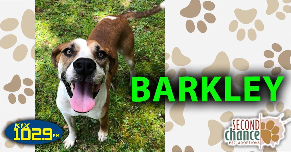 KIX Kitties and K9s:  Barkley