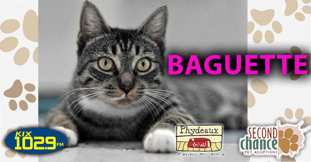 KIX Kitties and K9s:  Baguette