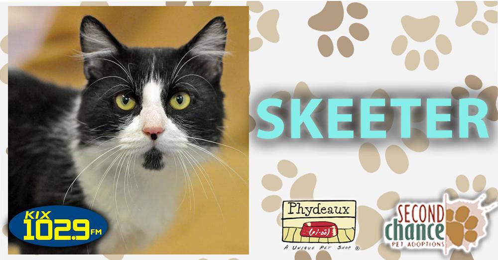 KIX Kitties and K9s: Skeeter
