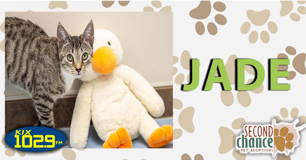 KIX Kitties and K9s: Jade