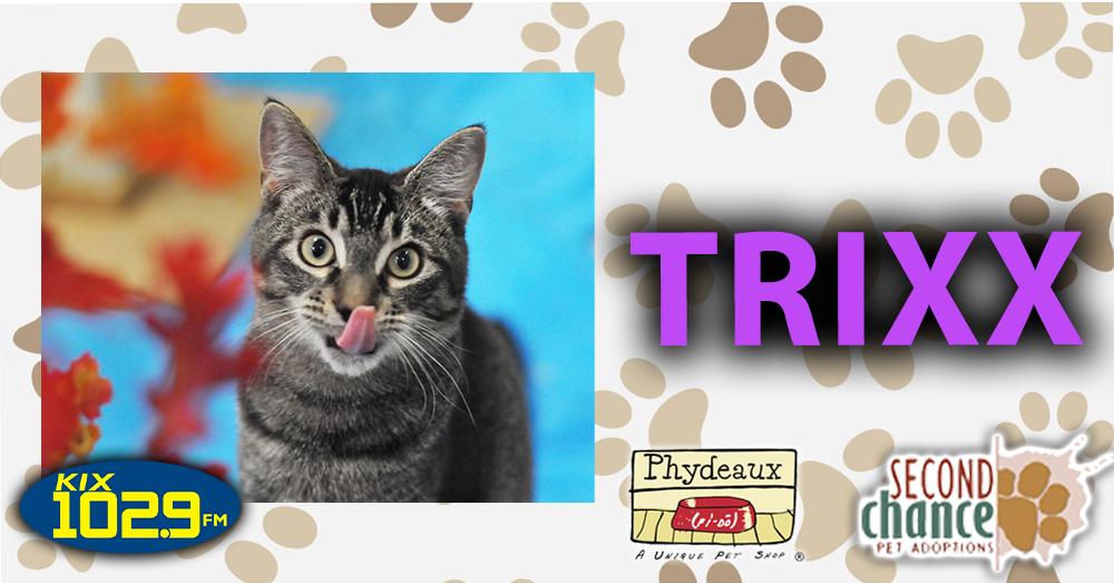 KIX Kitties and K9s: Trixx the Cat
