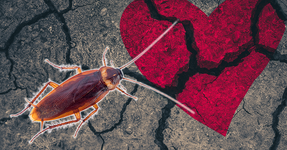 Name a cockroach after your ex and watch it be eaten on 2/14!