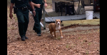Family dog protects 3-year-old boy lost in woods