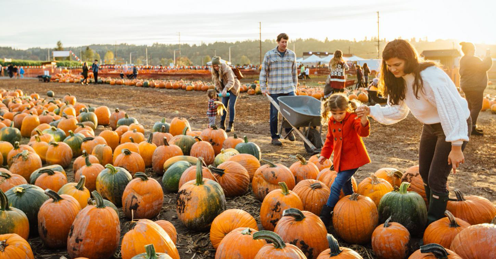 Halloween Events and Pumpkin Patches to Open This Weekend