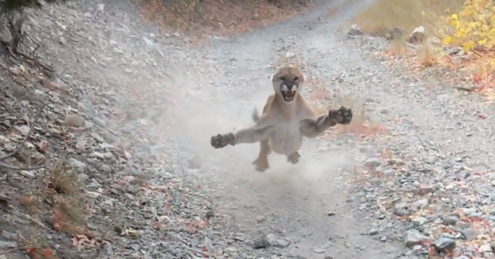 Man stalked by cougar for 6 minutes