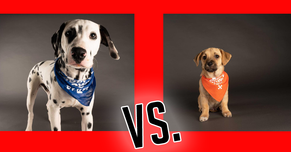 The starting lineup for the 2021 Puppy Bowl!