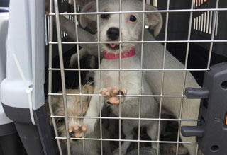 Homeless Pets from Puerto Rico Available for Adoption