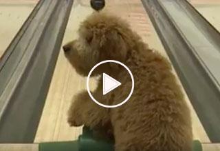 Blake the Bowling Dog