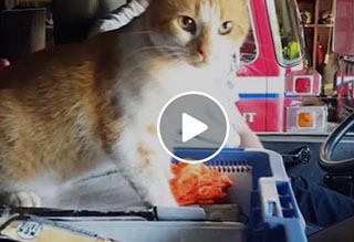 Watch: Firehouse Kitty