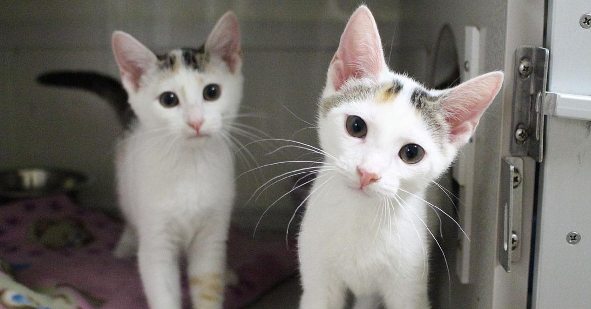 Wet Nose Wednesday: Crazy for Kittens!
