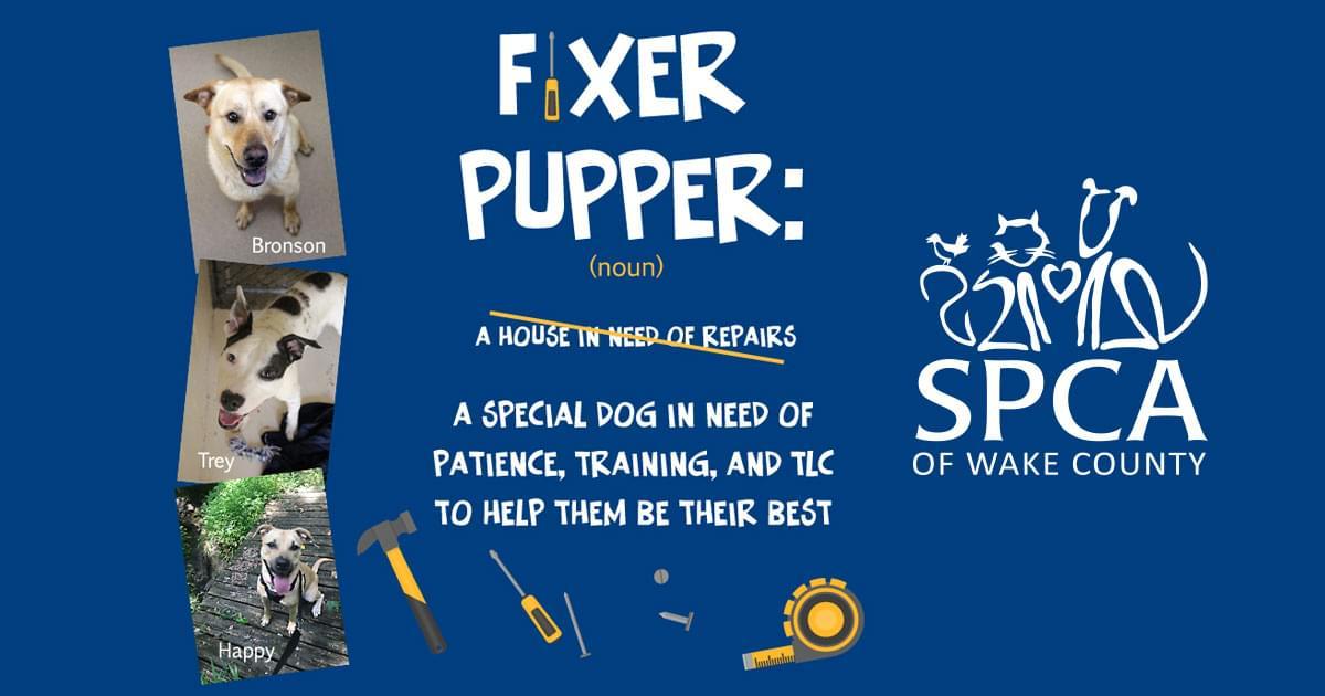 Fixer Pupper
