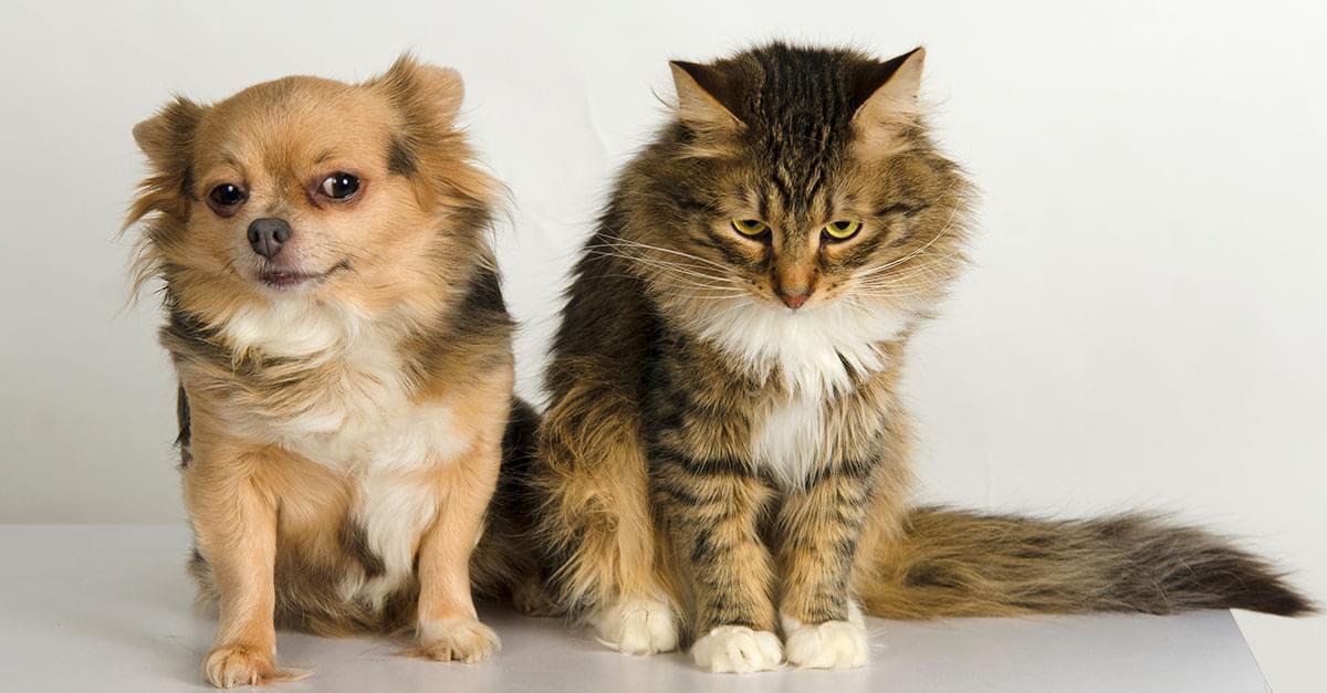 Beware! Your Pets are Dangerous