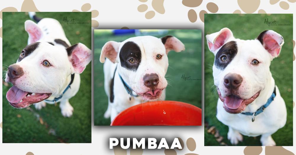 Wet Nose Wednesday: Pumbaa
