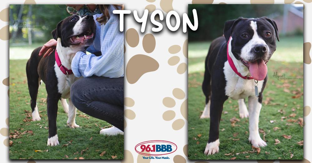 Wet Nose Wednesday: Tyson