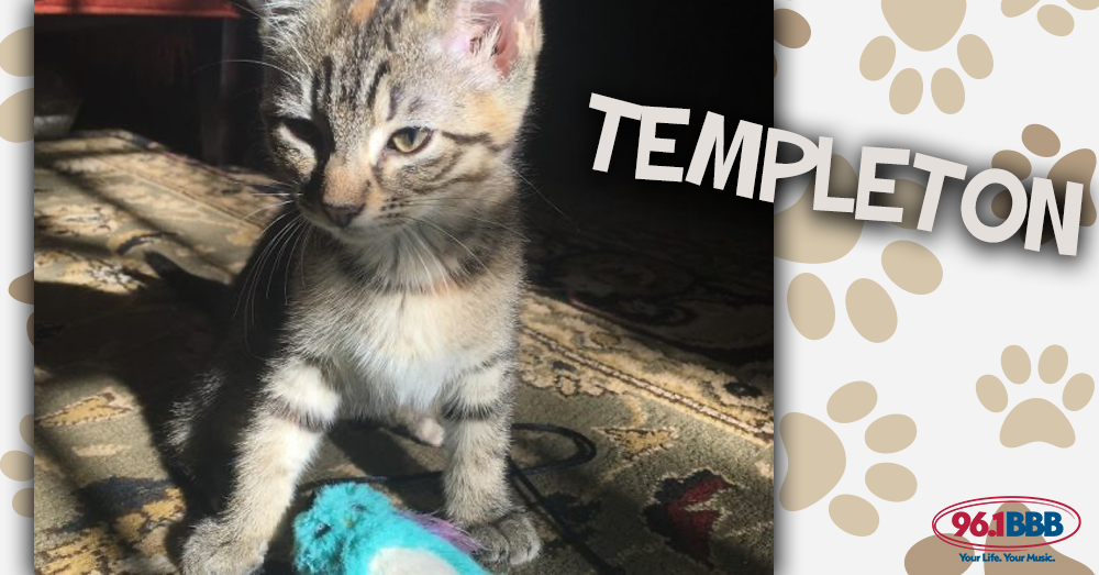 Wet Nose Wednesday: Templeton