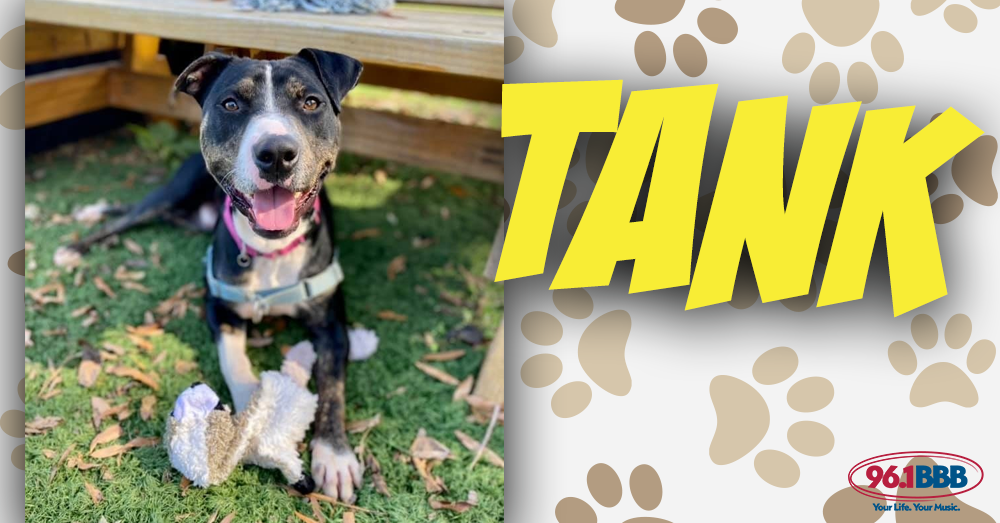 Wet Nose Wednesday: Tank