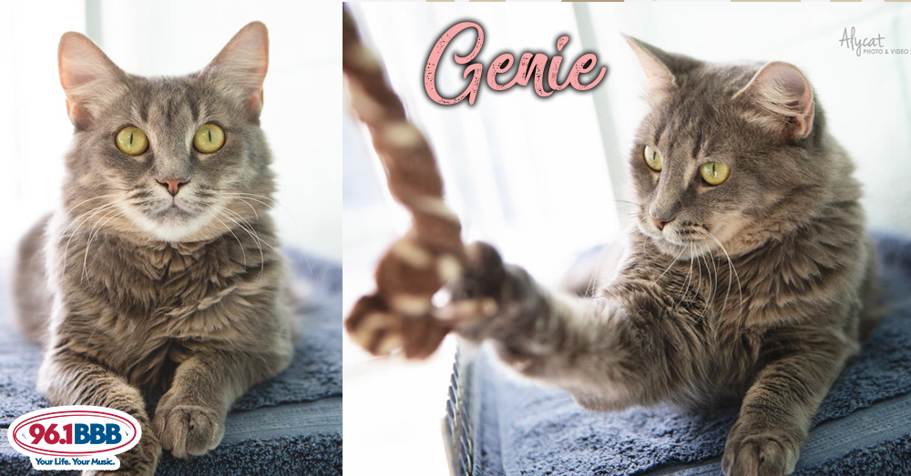Wet Nose Wednesday: Genie