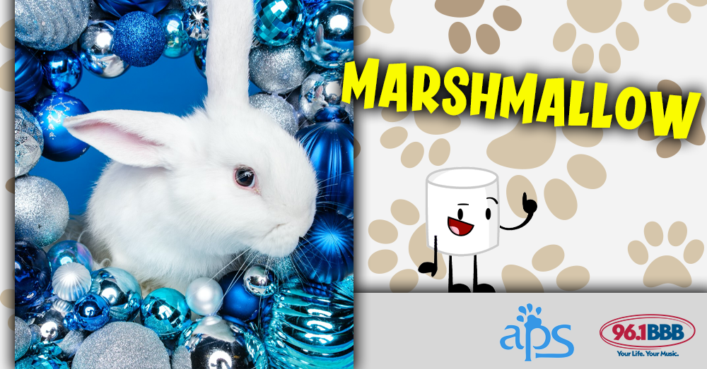 Wet Nose Wednesday: Marshmallow