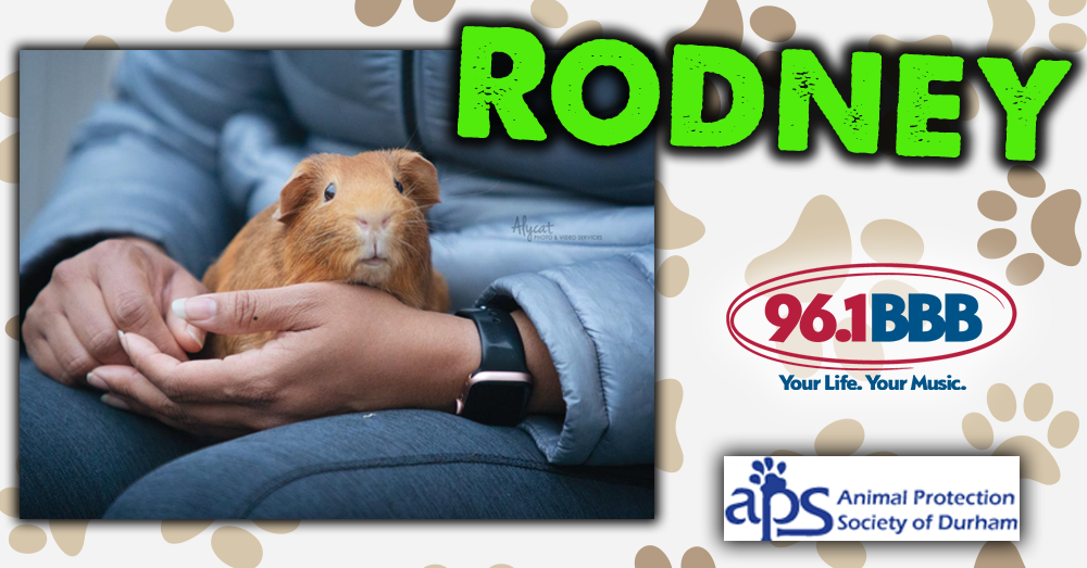 Wet Nose Wednesday: Rodney