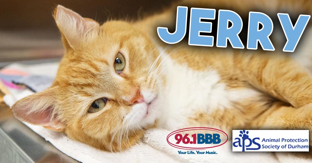 Wet Nose Wednesday: Jerry