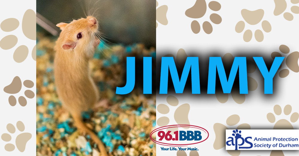 Wet Nose Wednesday:  Jimmy
