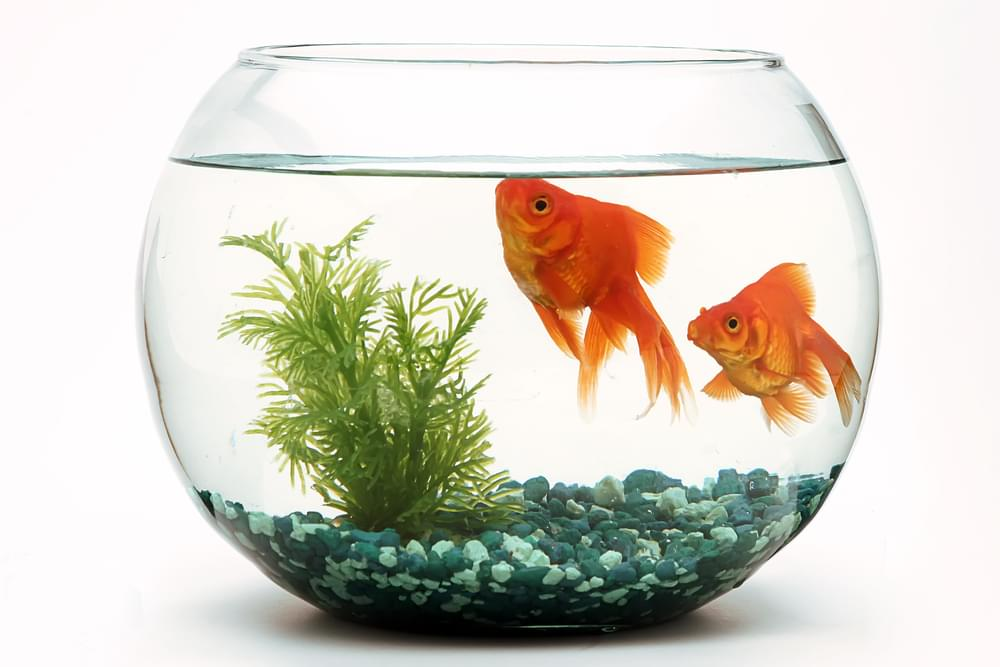 Say What?!: Man Charged with Animal Cruelty After Abandoning Pet Fish