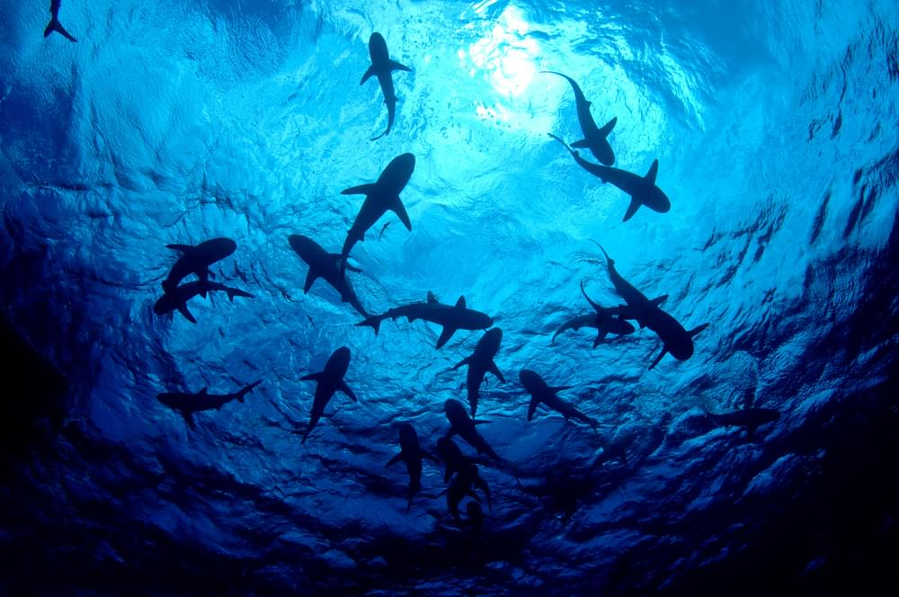 Atlantic Beach Shark Attack Victim Getting Free Prosthetic Assistance