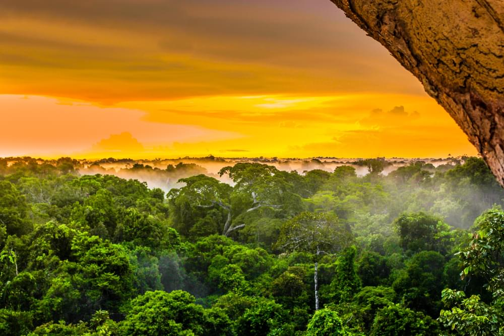 """The Amazon Rainforest aka """"The Planet's Lungs"""", Are Burning At Record Rate"""