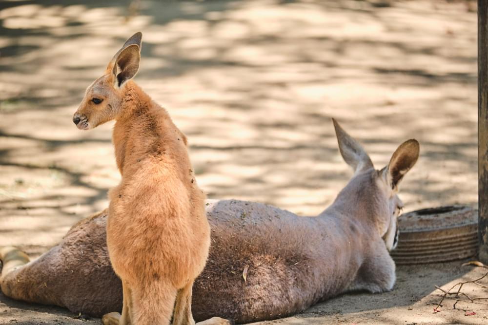 Australia Fires Could Have Killed 1 Billion Animals So Far