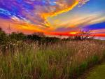 Just One Reason We Love Eastern North Carolina: Ocracoke
